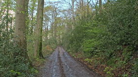 Forest road through the woods stock footage