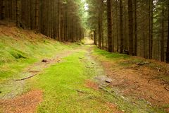 Forest roads Royalty Free Stock Image