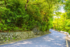 Forest roads Royalty Free Stock Images