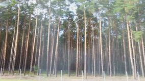 Forest on the roadside, view from fast moving car. Driving on interstate highway. Stock footage stock footage