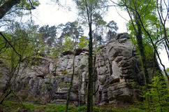 Forest and rocks Royalty Free Stock Photo