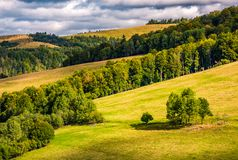 Forest on rolling hills under cloudy autumnal sky Royalty Free Stock Image