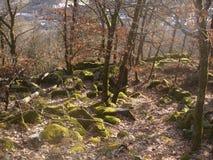 Forest Romeric Royaltyfria Bilder