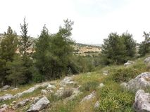 Forest of Rosh Ha`ayin. Trip in the Rosh Ha`ayin Forest, Central Israel Stock Image