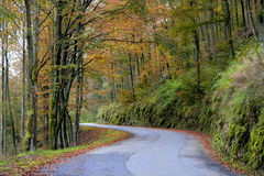 Forest roud. Forest route in the autumn Stock Photos