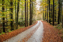 Forest roud. Forest route in the autumn Royalty Free Stock Photo