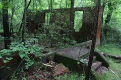 Forest Ruins imagem de stock royalty free