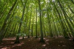 Forest Rujana Germany Lizenzfreies Stockfoto