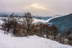 Forest in rural area in winter mountains. Forest with some foliage on hillside with snow in mountain area in winter Royalty Free Stock Image