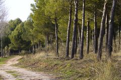 Forest with rural way Stock Image