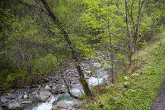 Forest and Rushing Stream Stock Images