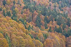 Forest's colors Royalty Free Stock Images