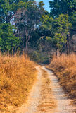 Forest safari trail Royalty Free Stock Photography