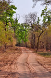 Forest safari trail. Trail for jungle safari in an india forest Royalty Free Stock Image