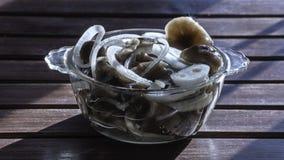 Pickles. Marinated mushrooms. Forest salty honey agarics. Marinated mushrooms Stock Images