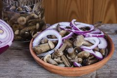 Pickles. Marinated mushrooms. Forest salty honey agarics. Marinated mushrooms Royalty Free Stock Photo