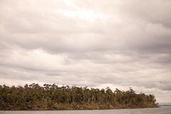 Forest at the San Rafael Lagoon, Patagonia, Chile Stock Photo