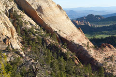 Forest and sandstone, Zion National Park Royalty Free Stock Photo