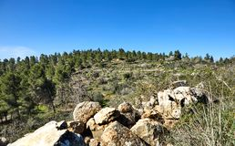 Forest of Sataf west of Jerusalem Israel. A beautiful area of hiking stock image