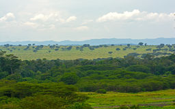 Forest and Savanna in Africa Royalty Free Stock Photos