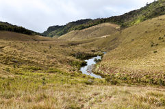Forest, savanna, and water at Horton Plains Stock Images
