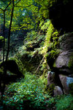 Forest in Saxon Switzerland Stock Images