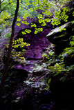 Forest in Saxon Switzerland Royalty Free Stock Photos