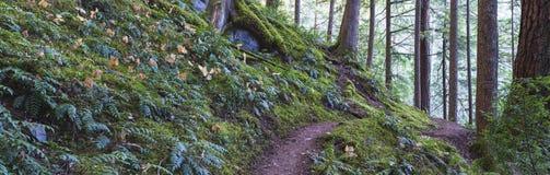 Forest Scape Fotografía de archivo libre de regalías