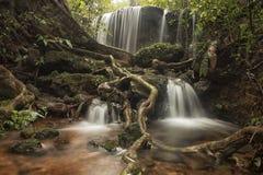 Forest Scape Royaltyfri Fotografi