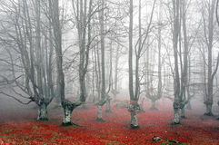 Forest with scary trees Royalty Free Stock Image