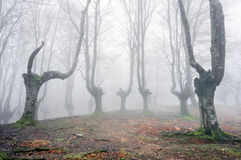 Forest with scary trees Royalty Free Stock Photo