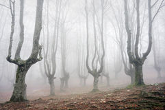 Forest with scary trees Stock Images
