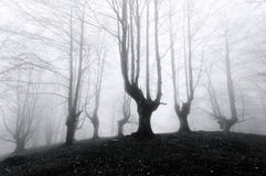 Forest with scary trees Stock Image