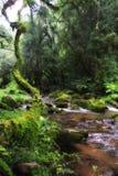 Forest scene. River, green, portrait, fantasty like, Drakensburg South Africa Stock Images