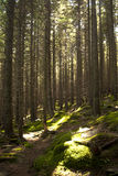Forest scene Stock Photography