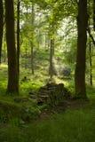 Forest scene Stock Image