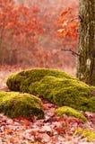 Forest scene in autumn Stock Photos