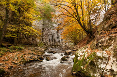 Forest scene Bigar Royalty Free Stock Photography