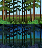 Forest scene at day time and night time. Illustration Stock Photos