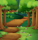 Forest scene with dirt road in the middle. Illustration Royalty Free Stock Images