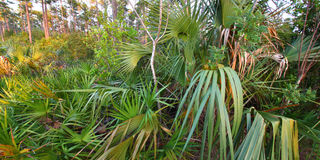 Forest Scene - Everglades Stock Photography