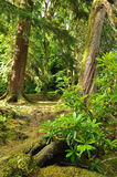 Forest scene in Kerry Ireland Royalty Free Stock Image
