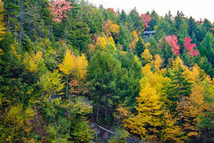 Forest scene near Blackwater Falls in the Fall royalty free stock image