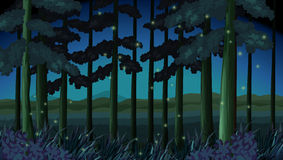 Forest scene at night with fireflies Stock Images