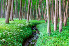 Forest scene with a small creek Royalty Free Stock Photo