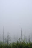 Dead Trees in the Mist Royalty Free Stock Images