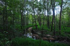 Forest Scene with stream. Forest scene with creek flowing gently under the trees and sunlight filtering through the leaves stock photos