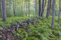 Forest Scene in summer Royalty Free Stock Photos