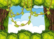 Forest scene with tree and vine. Illustration Royalty Free Stock Images