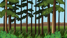 Forest scene with trees and field. Illustration Stock Photos